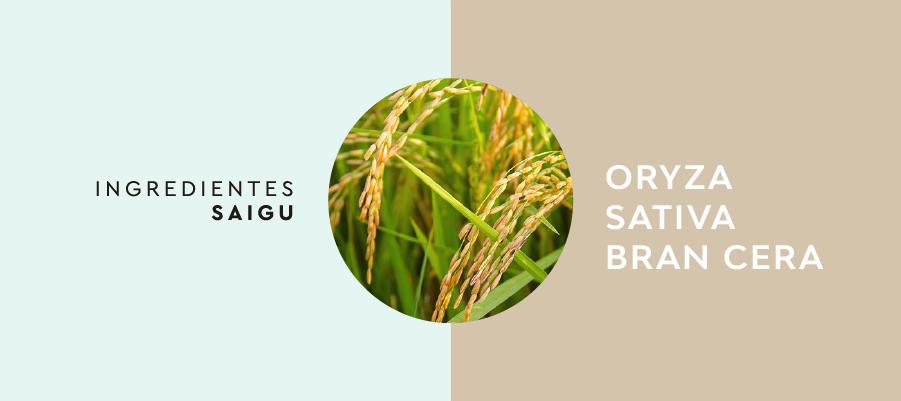 Oryza Sativa Bran Cera Merupakan Produk Yang Multifungsi